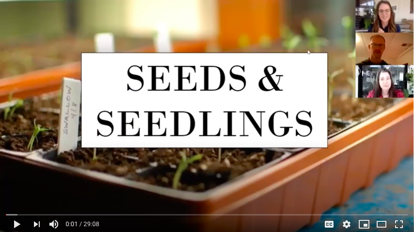 Screen shot of seedling tray