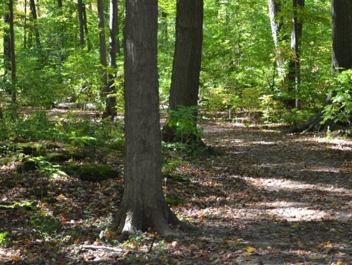 The Bruce Trail through Beamers Conservation Area